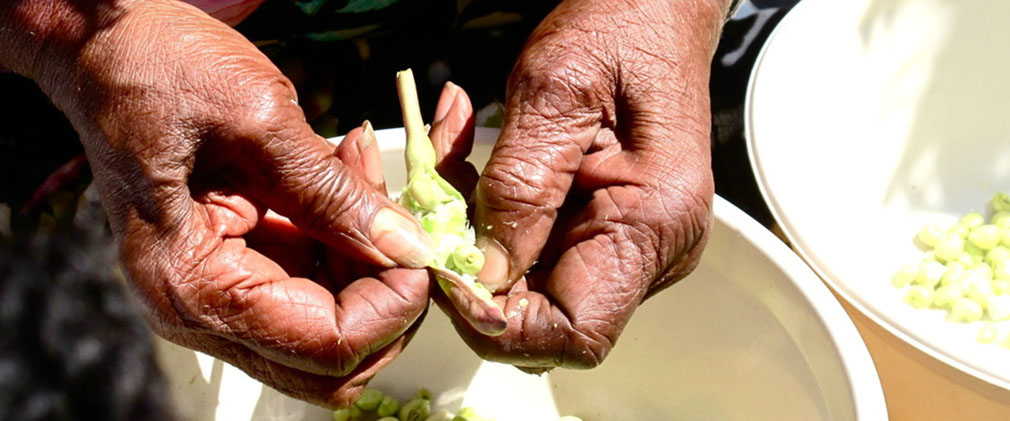 close-up of hands shucking pea pods