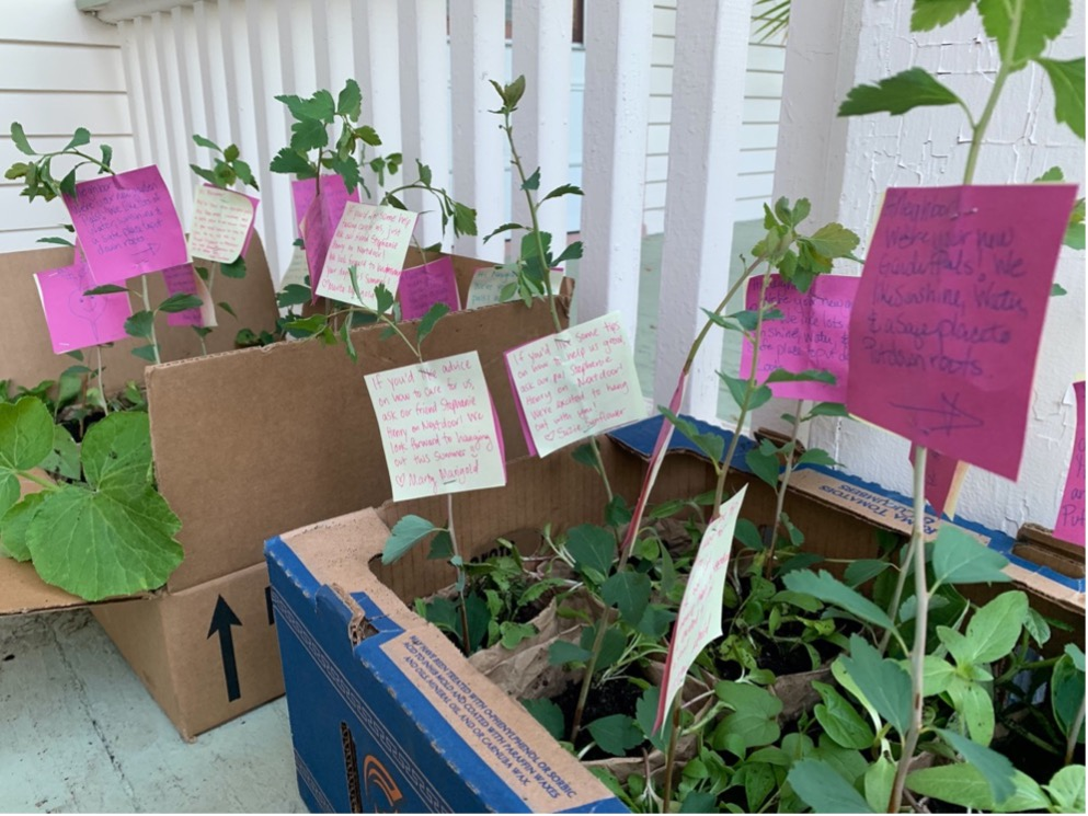 """COVID Community Get-to-know-you Gardens"""